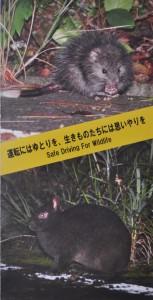 アマミノクロウサギなどの交通事故防止を呼び掛けるポスター