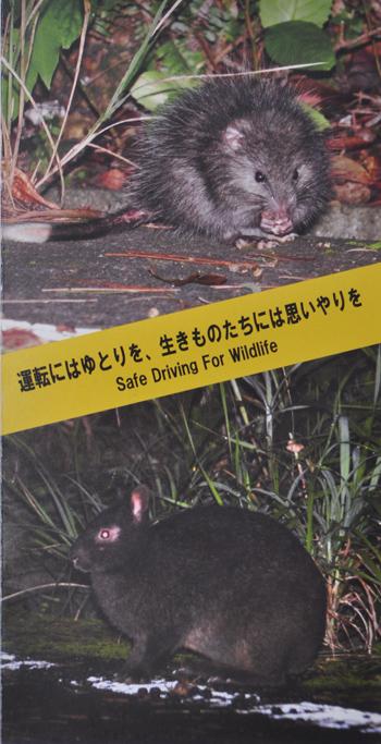アマミノクロウサギの画像 p1_38