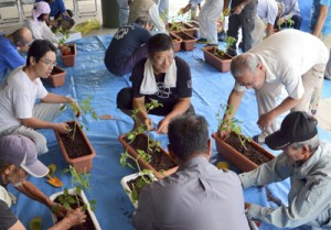 プランターに苗植え。慣れた手付きの人の中にそうでない人も=9日、瀬戸内町加計呂麻島諸鈍