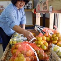 直売所に並ぶ地場産ミカン。関係者は加工品の原料調達にも気をもむ=5日、奄美市住用町