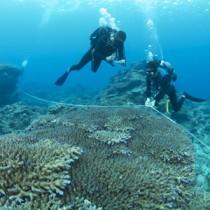 サンゴ礁の海の健康度を調べるダイバー=12日、加計呂麻島安脚場沖(奄美海洋生物研究会の興さん撮影)