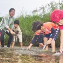 リュウキュウアユが産卵しやすいように川床を整える児童ら=29日、宇検村の河内川