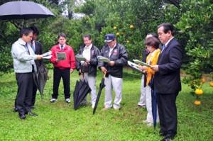 視察のため果樹園を訪れた果樹・園芸振興振興調査会の役員ら=28日、龍郷町