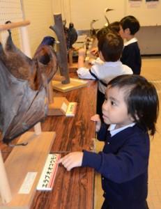 興味深そうに動物の剥製に見入る子どもたち=11日、奄美市