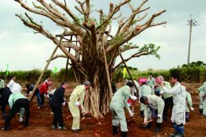 ガジュマルなど、奄美を象徴する樹木300本の記念植樹を行った奄美群島地区植樹祭=3日、喜界町(提供写真)