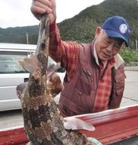奄美市住用町の沿岸で捕獲されたオオセ