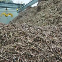 製糖が始まり工場に搬入された原料キビ=22日、徳之島町