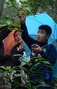 スマートフォンに入れたデジタル図鑑を片手に植物の名前を探した観察会=23日、龍郷町の奄美自然観察の森