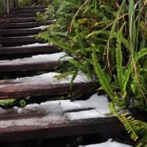 冷え込みが続き、あられが堆積した奄美群島最高峰の湯湾岳=25日正午ごろ、大和村側登山道