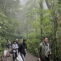 金作原原生林探検ツアーを楽しむ参加者ら=30日、奄美市名瀬