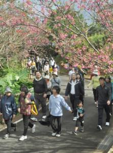 桜の花を楽しみながらウオーキングを楽しんだ参加者ら=31日、徳之島町