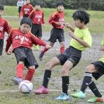 38チームが出場し、熱戦の火ぶたを切った南海日日新聞社旗少年サッカー大会=30日、奄美市の古見方多目的広場