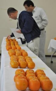 14点が出品されたタンカン品評会=28日、徳之島町