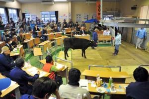 平均価格74万8878円を付けた奄美市笠利町での子牛競り市=15日