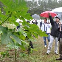 現地視察でパパイアのほ場を訪れたダイエーの寺嶋晋執行役員(右)ら=21日、徳之島町