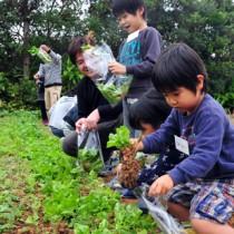 農園で育てられた新鮮な野菜の収穫体験を通じて、農業を身近に感じたバスツアー=10日、奄美市笠利町