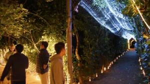 国直集落で開催されているフクギ並木のライトアップイベント「ふくぎナイト」=14日、大和村(NPO法人TAMASU提供)