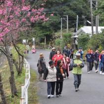 ヒカンザクラを眺めながら思い思いのペースでウオーキングを楽しむ参加者=14日、奄美市住用町