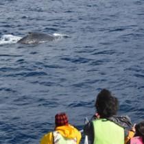 水面に浮上したザトウクジラを観察する観光客ら=7日、奄美市名瀬小湊沖