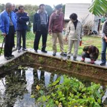 地元ガイドの案内で、ビオトープを見学するツアー参加者=1月31日、知名町瀬利覚