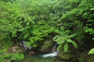 奄美大島の林道で楽しめる自然景観