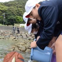 シマアジを放流する住用小児童たち(円内はシマアジの稚魚)=14日、奄美市住用町山間