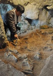 下原洞穴遺跡で出土した男女2体とみられる人骨(上)とブダイの下顎を研磨して穴を開けた装飾品=14日、天城町