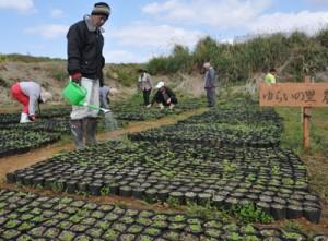 アマミシマアザミの苗作りに取り組むゆらいの里の利用者ら=3日、伊仙町