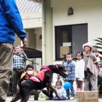 公開訓練でマングースの臭い付きタオルが隠された箱を当てる探索犬=27日、大和村の環境省奄美野生生物保護センター