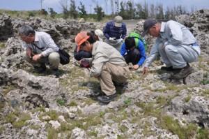 沖永良部島の希少種を観察するメンバー=3日、沖永良部島東部