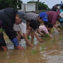 復活した水田で苗を植える老若男女=17日、和泊町後蘭