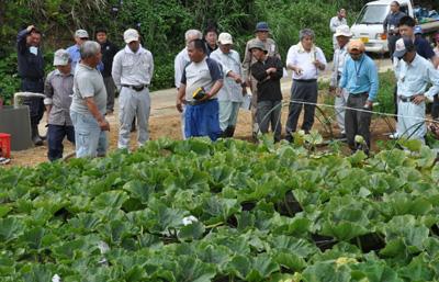 伊仙町で畑かん営農研修会 | 南海日日新聞