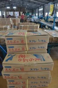 スプレーギクなどの出荷作業に追われる沖永良部花き専門農協の集出荷場=8日、和泊町