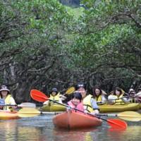 マングローブを巡りながら自然を満喫するカヌーツアー客=29日、奄美市住用町