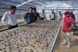 沖永良部島のキクラゲ生産会社を視察する伊志嶺理事長(左から2人目)ら=7日、和泊町国頭