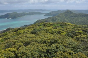 奄美の春を彩る新緑=2日、龍郷町の奄美自然観察の森から撮影