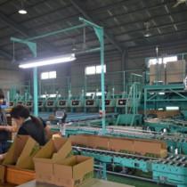 新規導入された機械で選別、出荷作業が行われているサトイモ選果場=17日、与論町茶花