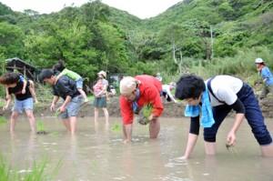 老若男女が約40年ぶりの田植えを楽しんだ=10日、瀬戸内町久慈の大浜地区