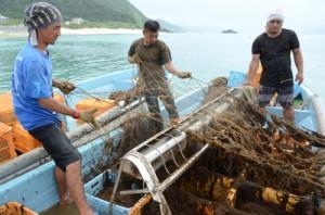機械を使ってモズクを収穫する男性たち=26日、奄美市笠利町