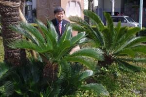 植樹されたソテツを見つめる牧野さん=東京都世田谷区の日本体育大学正門