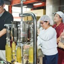 オリジナル商品であるタンカンリキュールの製造を体験する生徒=13日、龍郷町