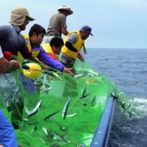 伝統漁法「ロープ引きトビウオ漁」の復活に向けて行われた試験操業