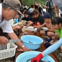 地元住民に教わりながら魚をさばく児童ら=12日、奄美市名瀬の有良海岸