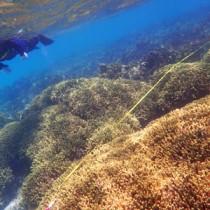 リーフ内で健康を保っているサンゴの群落=25日、与論町茶花のウドノス海岸沖