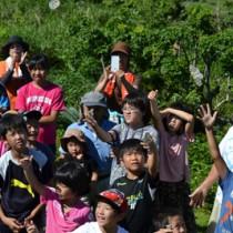 オオゴマダラを放す子どもたち=19日、与論町琴平神社