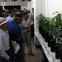 アボカドの苗木を見学する参加者=26日、瀬戸内町