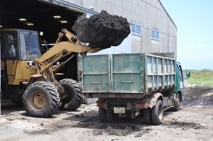 キビ夏植えの助成事業で投入される堆肥=11日、沖永良部島の南栄糖業