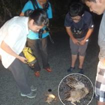 ノネコに襲われたリュウキュウコノハズクの死骸とその現場=奄美市住用町の林道(提供写真)