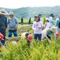 収穫の喜びを味わいながら稲刈りをする児童と住民= 17日、龍郷町秋名
