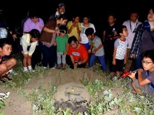 ウミガメの産卵を見守る奄美塾の講座生=9日、龍郷町安木屋場(提供写真)